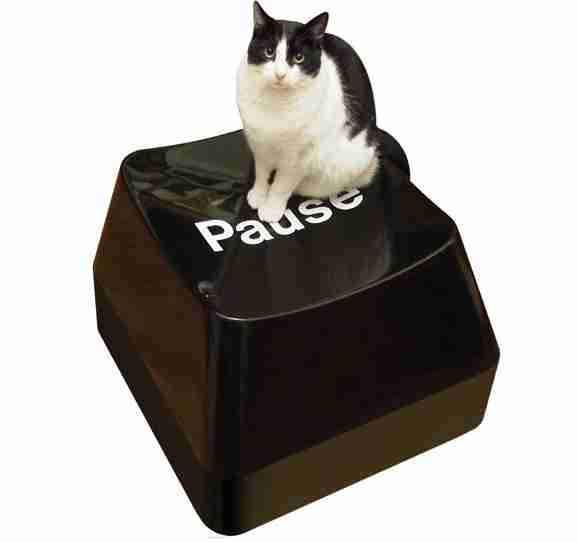 image-chat-assi-sur-touche-pause-clavier-pc