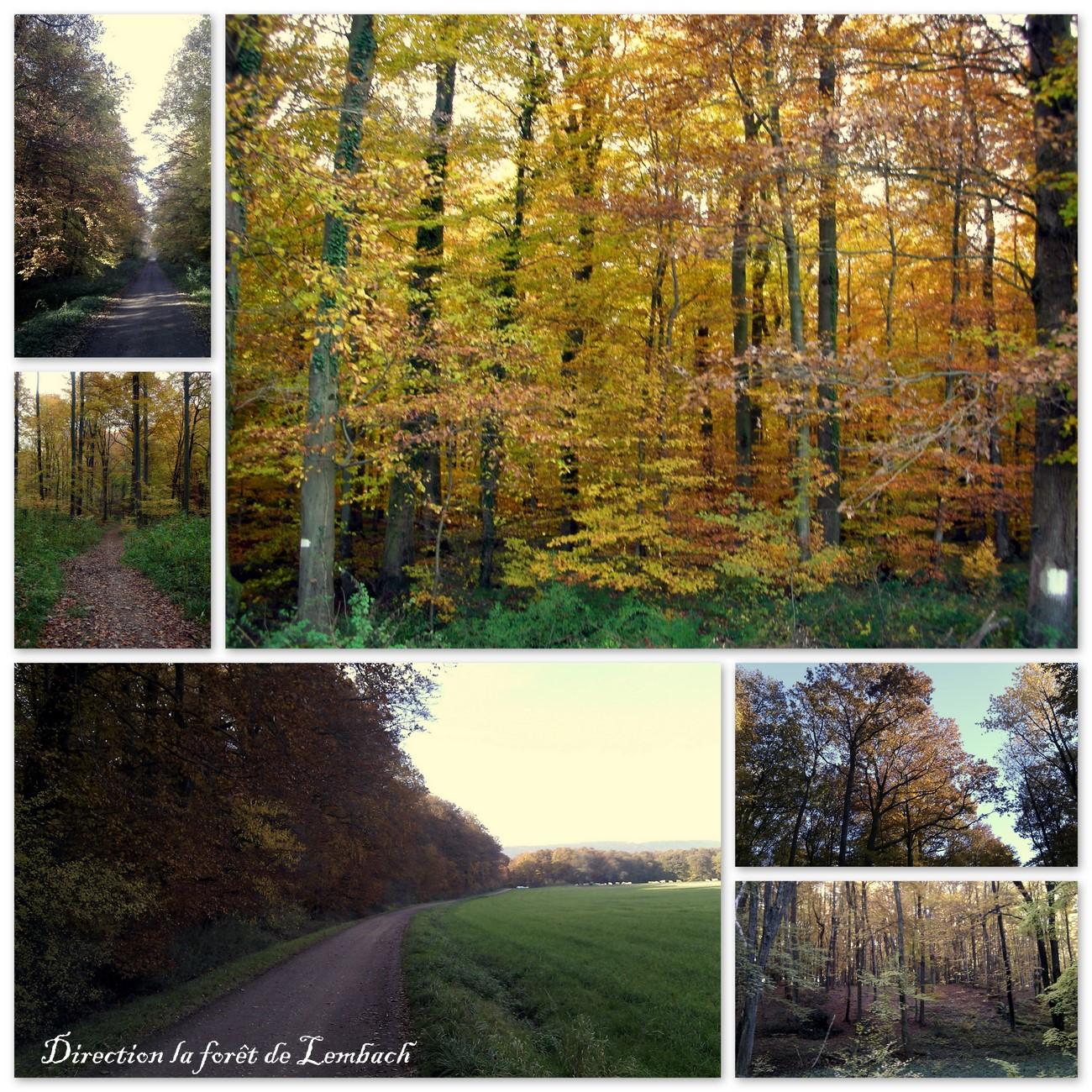 Activités d'automne...