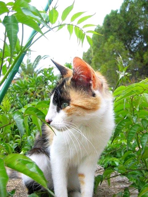 http://s3.archive-host.com/membres/images/815358193/blog/1_CLEMENTINE_JUIN_D_2011_005.jpg