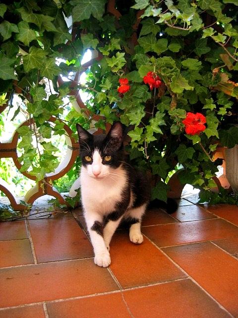 http://s3.archive-host.com/membres/images/815358193/blog/1_JUIN_16_2011_030.jpg