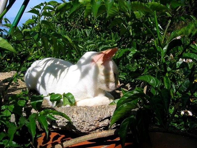 http://s3.archive-host.com/membres/images/815358193/blog/4_JUIN_14_2011_020.jpg